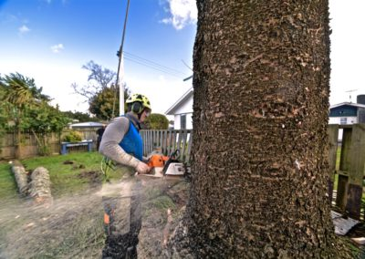 Tree Cutting in Progress in Auckland, North Shore