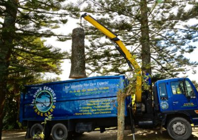 Auckland Tree Removal Services