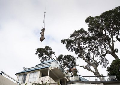 Tree Removal, 24-hour emergency tree removal