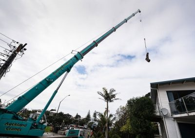 Tree Removal Experts with Specialised Crane.