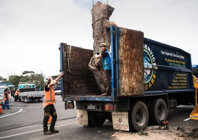 Tree Removal Experts, we do all the heavy lifting.