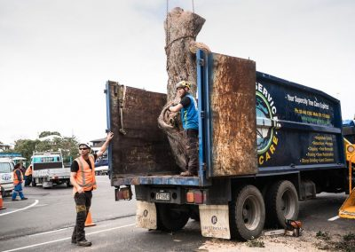 Tree Removal Experts in Auckland.
