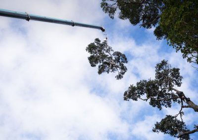 Tree Removal Specialists in North Shore.