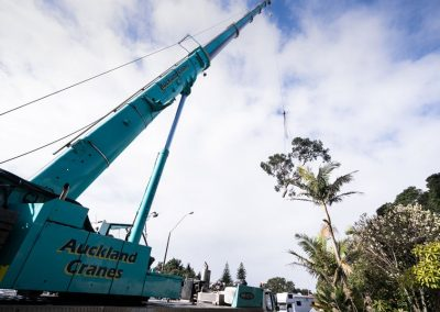 Premier Tree Removal Company in Auckland, North Shore.