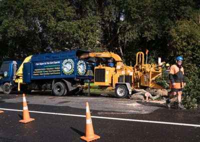 Tree Removal Experts in Auckland