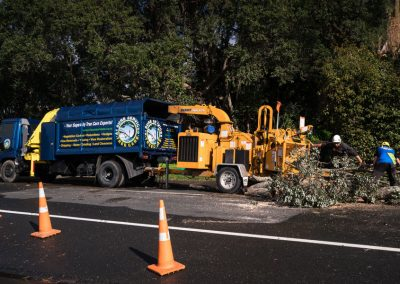 Tree Removal Experts in North Shore.