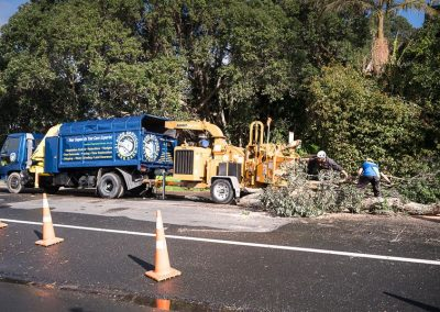 Premier Tree Removal Auckland Company