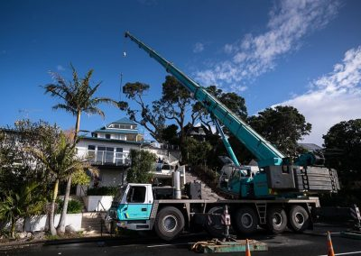 Tree Pruning and Removal Auckland Specialists