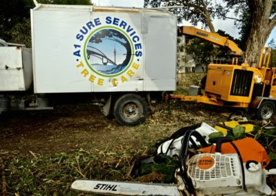 North Shore Arborist