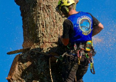 Premier Tree Removal Company Auckland