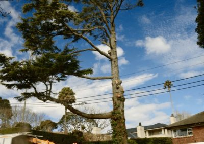 Tree Removal Auckland
