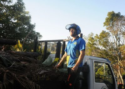 Qualified Arborist in Auckland.
