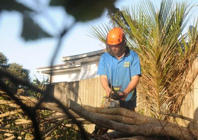 Tree Cutting Specialists in Auckland.