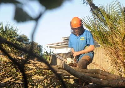 Tree Cutting Specialists in North Shore.