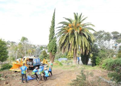 Palm Tree Removal in North Shore.