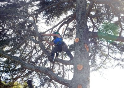 Tree Cutting and Removal in North Shore